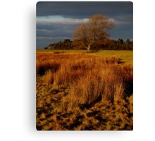 Winter-sunlit tree, Llanfairfechan Canvas Print