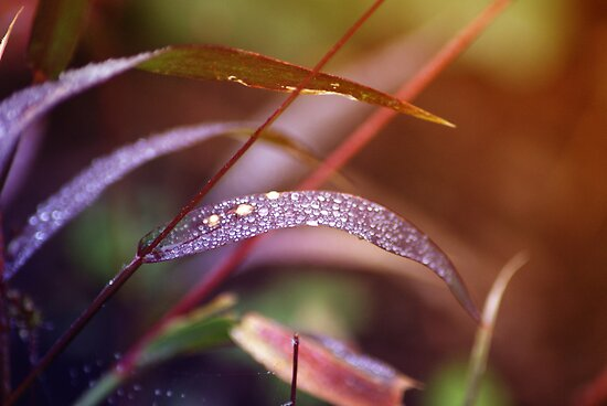 Magic Droplets by ©Maria Medeiros
