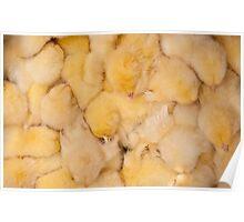 Huddled Chicks Poster
