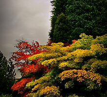 Autumn Colour at Harlow Carr by Colin Metcalf