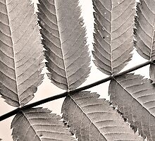 Monochrome leaf by marina63