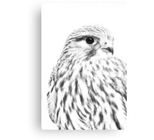 Female Kestrel line drawing Canvas Print
