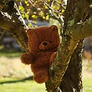 Up a tree by Penny Rinker
