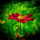 Red Cosmos Flower Abstract Art by Nhan Ngo