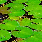 Green Lotus Leafs by juat