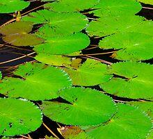 Green Lotus Leafs by juat
