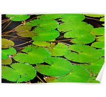Green Lotus Leafs Poster