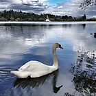 Swan Song - Robert Charles  by RobertCharles