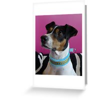 Eino with his new collar Greeting Card