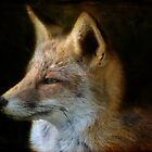 Fox II by Nicole W.