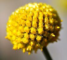 Yellow ball by marina63
