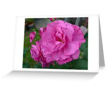 Wild Edric Roses Greeting Card
