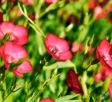 Small Red Flowers by marina63