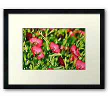 Small Red Flowers Framed Print