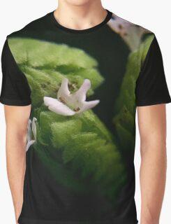 Oregano Graphic T-Shirt