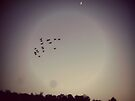Flying Under the Moon by FrankieCat