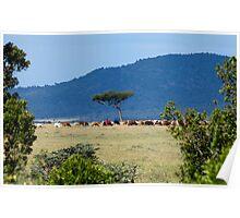 Masai Herdsman Poster