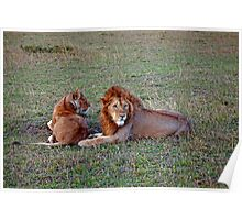 Lions at Dusk Poster