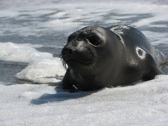 Marine Mammal On Watch by DCorreia247