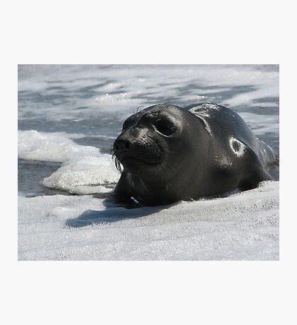 Marine Mammal On Watch Photographic Print