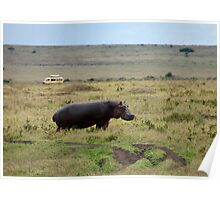 Hippopotamus on the Masai Mara Poster