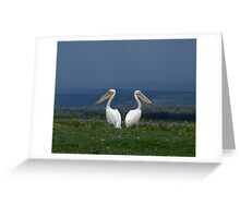 Great White Pelicans facing away from each other Greeting Card
