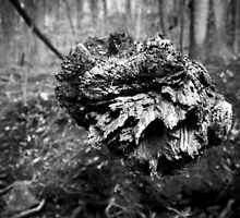 BnW Log Close Up : 1  by Christopher Boscia