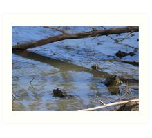 Bullfrogs Art Print