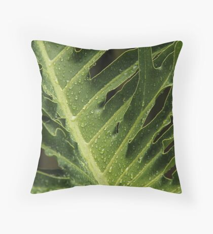 Philodendron selloum - Tree philodendron  Throw Pillow