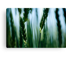 out of blur ears Canvas Print