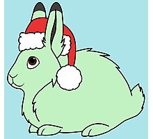 Light Green Arctic Hare with Christmas Red Santa Hat Photographic Print