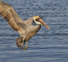 Coming in to Land by Kate Adams