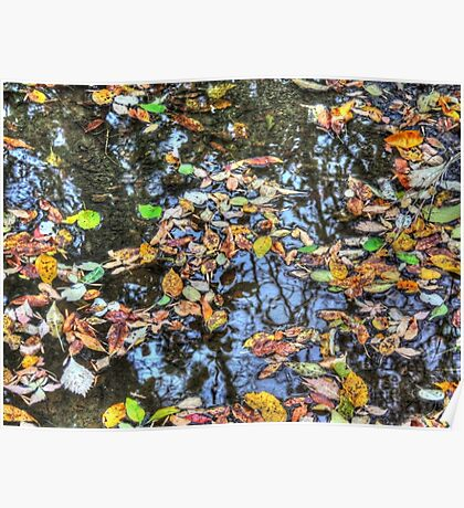 Fall Leaves Afloat Poster