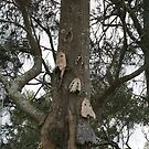 Skull Tree at Tuncurry by aussiebushstick