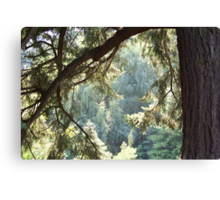 View Through The Trees Canvas Print