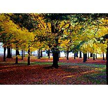 A Fall Carpet............. Photographic Print