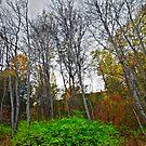 Autumn Island by Marcus Angeline