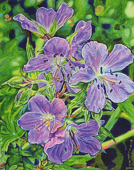 5 Wild Geraniums by Morgan Ralston