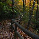 Natural Bridge Trail by Kent Nickell