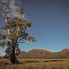 Cazneaux Tree by Rosie Appleton