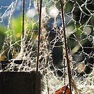 Webs by kossimarsalsa