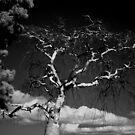 Devil Tree by bradydhebert