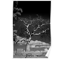 Devil Tree Poster