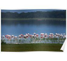 Flamingos at Dusk Poster