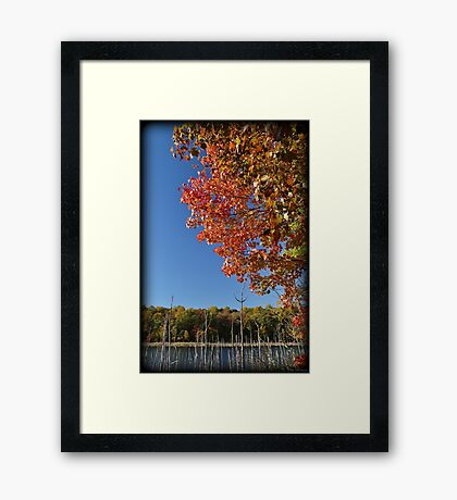Color Cove Afternoon Framed Print