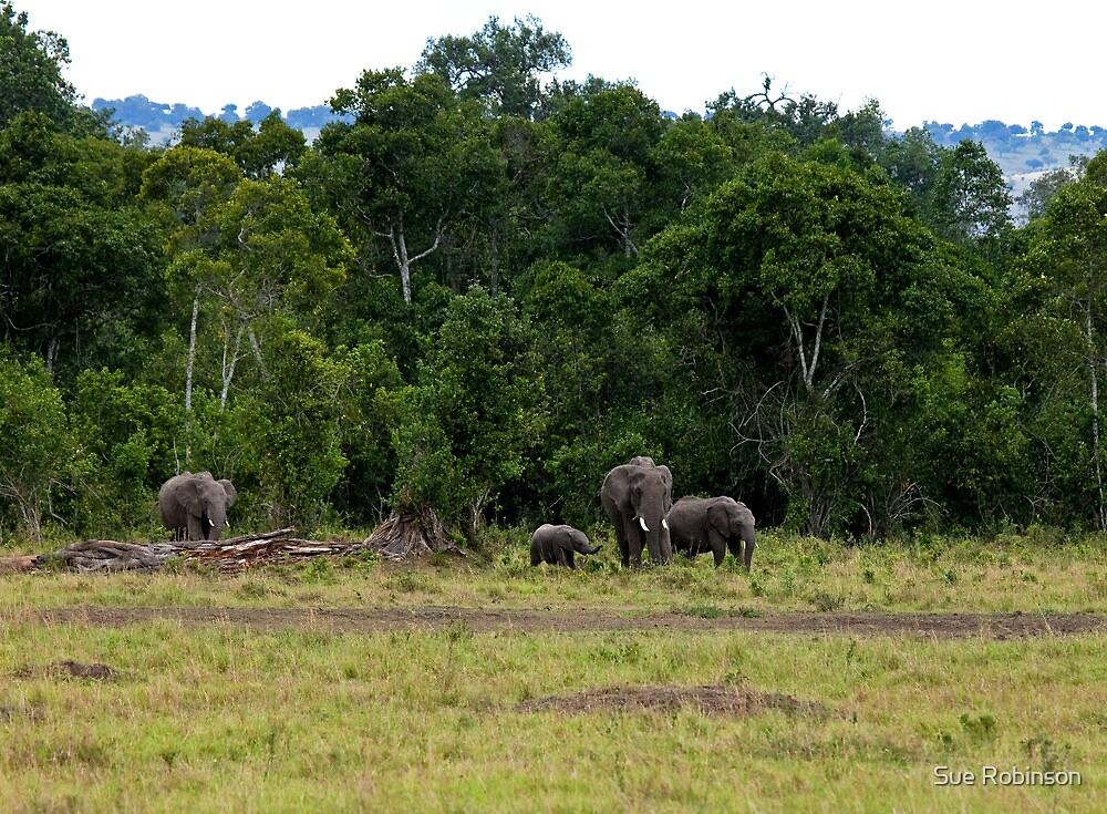Elephant group on Masai Mara by Sue Robinson