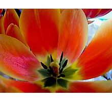 touch of colour Photographic Print