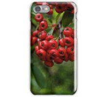 Christmas Red Berries iPhone Case/Skin