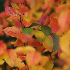 Leaves by Bluesrose