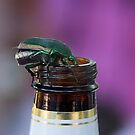 Beer Bottle Beetle by CarolM